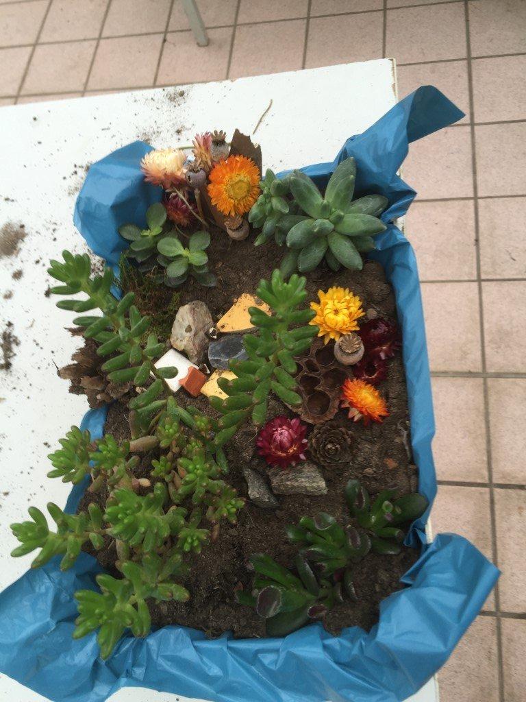 Unsere kleinen Gärten (6)