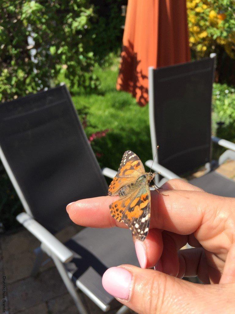 05.05.16 Machs gut Schmetterling